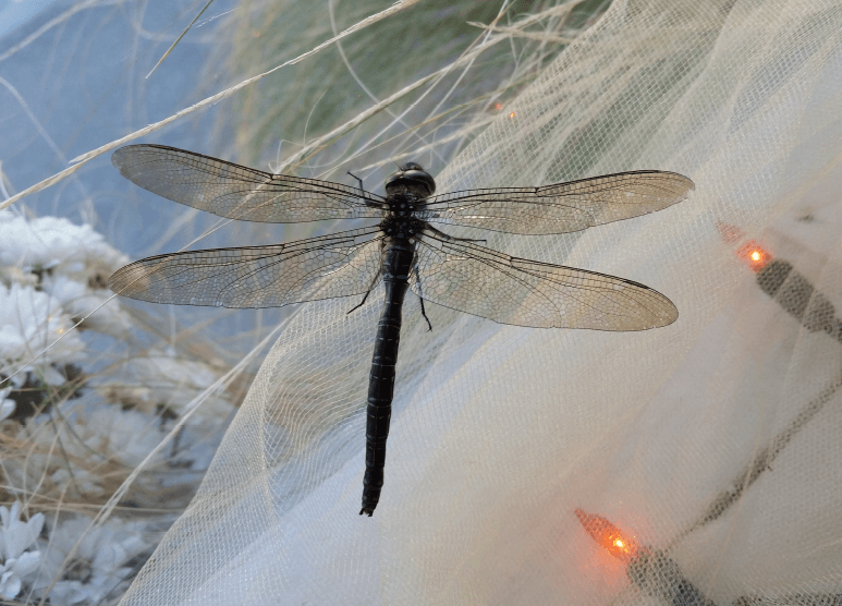 Photo of a real dragonfly in a window decorated for the holidays.